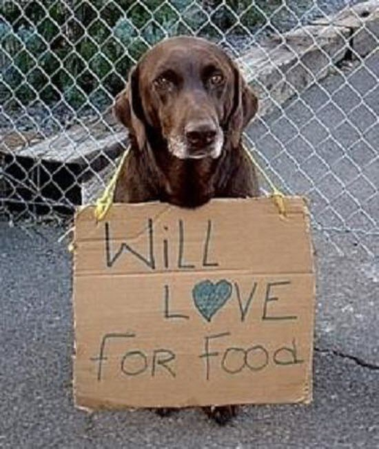 Will love for food (2)
