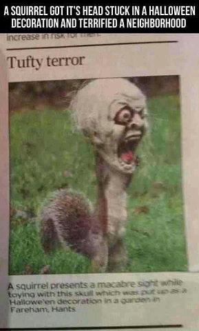 Squirrel monster