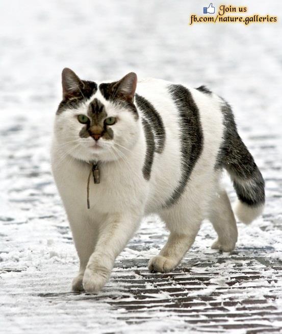 Interesting cat