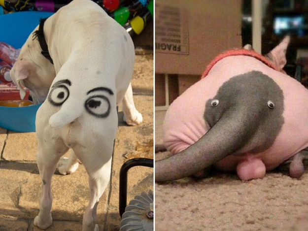 Pet butt3
